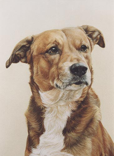 pet portrait1